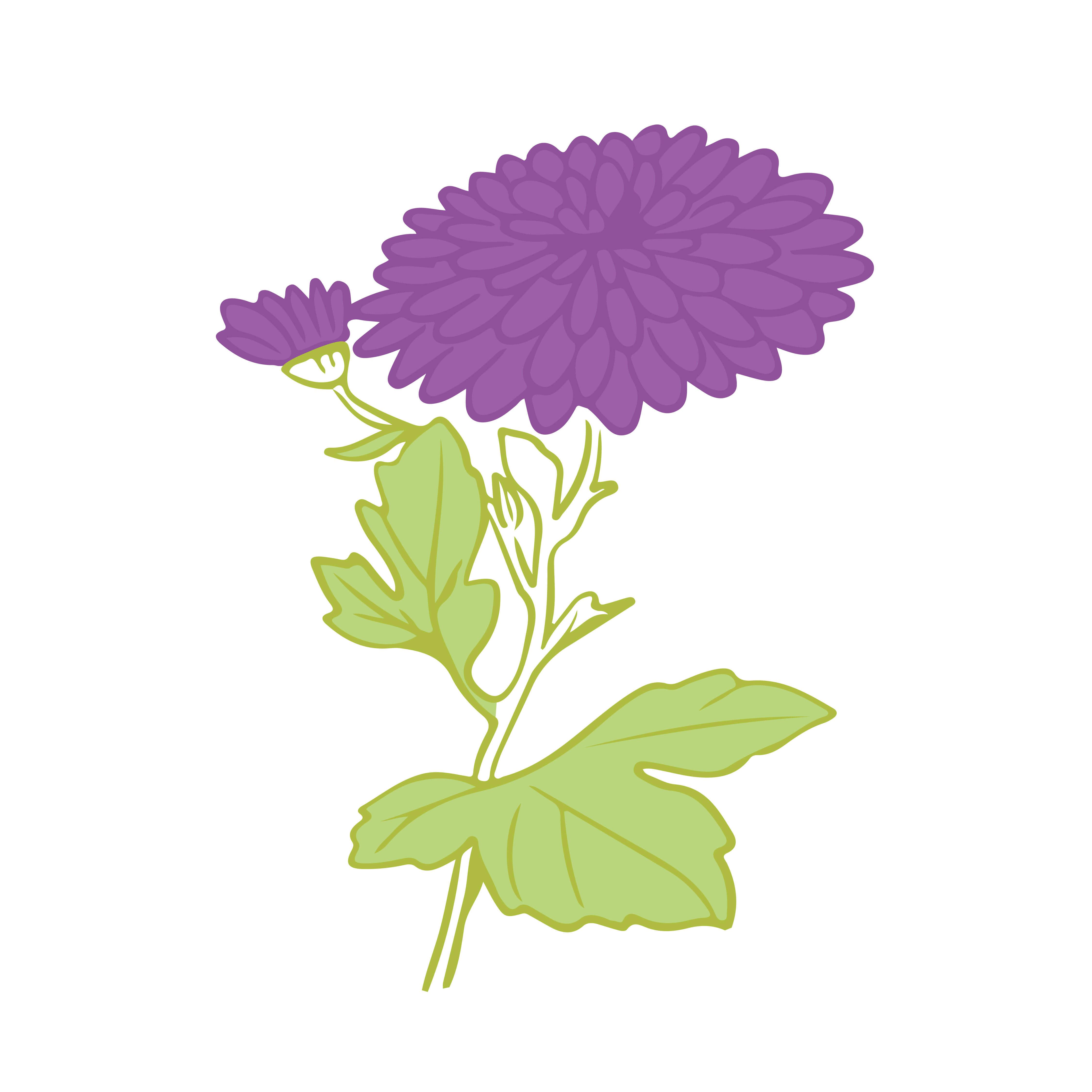 San Vicente, la flor de 2021