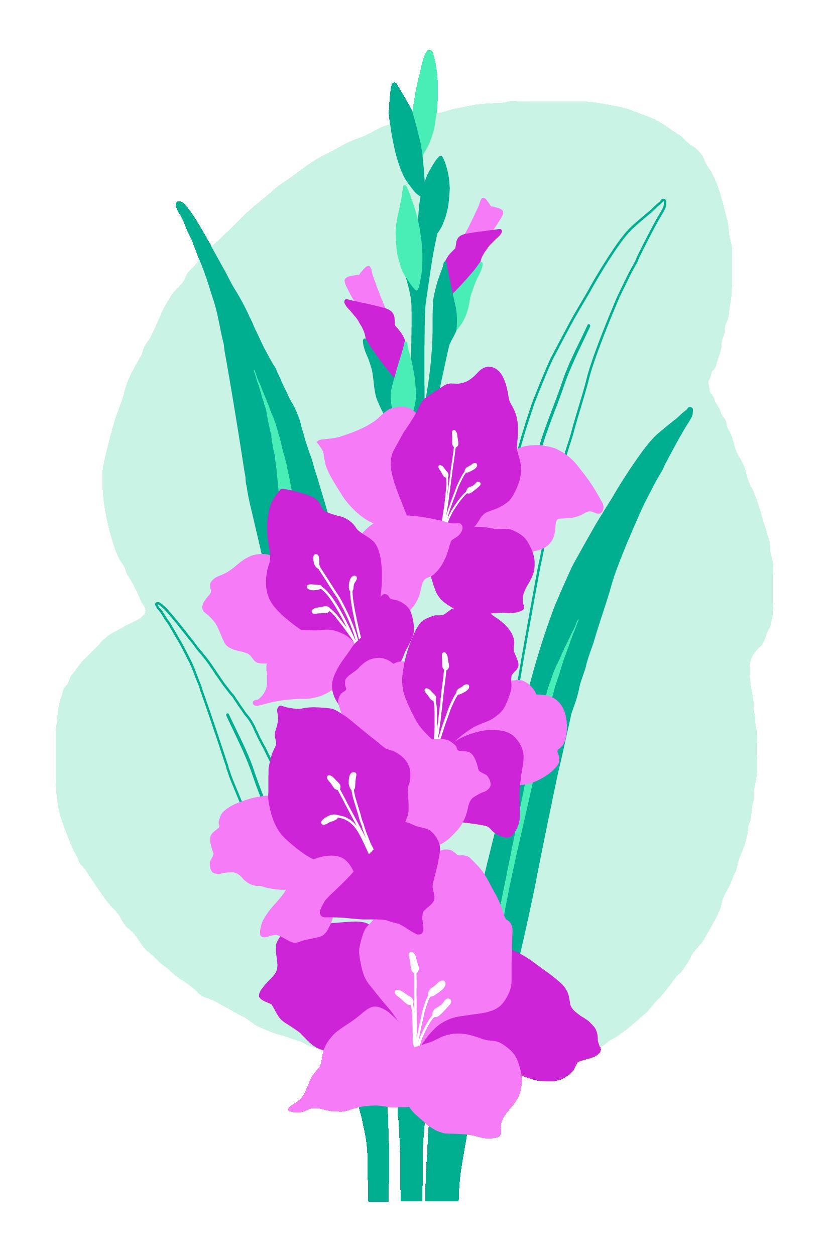 Gladiolos, la flor del 2020