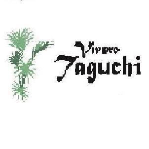 ViveroTaguchi