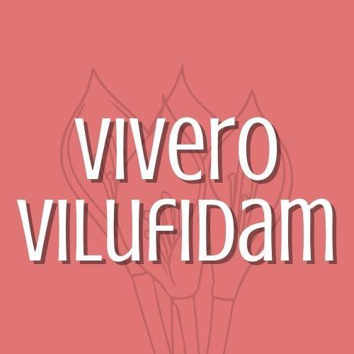 Vilufidam