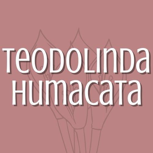 TEODOLINDA HUMACATA