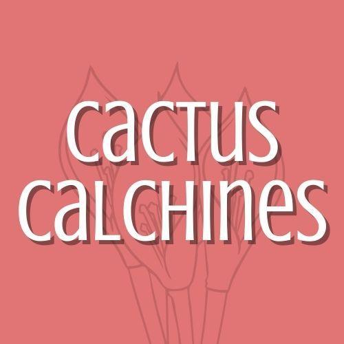 Cactus Calchines